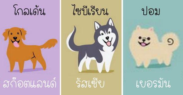 รู้จักชาติกำเนิดของสายพันธุ์สุนัขทั่วโลก ด้วย Infographic แบบง่ายๆ