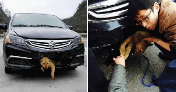 นึกว่าตายแล้ว !! คำพูดจากคนขับรถชนสุนัขและลากมาไกลกว่า 400 กิโลเมตร