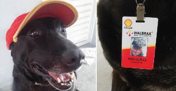 หมาน้อยน่าสงสารถูกเจ้าของทิ้ง กลับกลายมาเป็นเด็กปั๊มที่น่ารักที่สุดในโลกแทน ^^