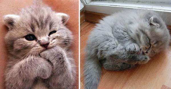 20 ภาพที่มีแต่แมวล้วนๆ คัดแบบน่ารักสุดๆมาให้ดูกันเลย