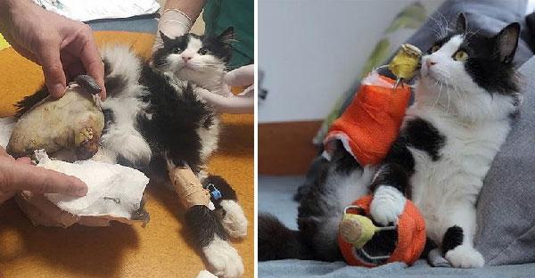 เหมียวจรน่าสงสารถูกรถไฟทับขาขาด ก่อนสัตวแพทย์มอบขาใหม่ให้จึงกลับมาเดิน 4 ขาได้อีกครั้ง
