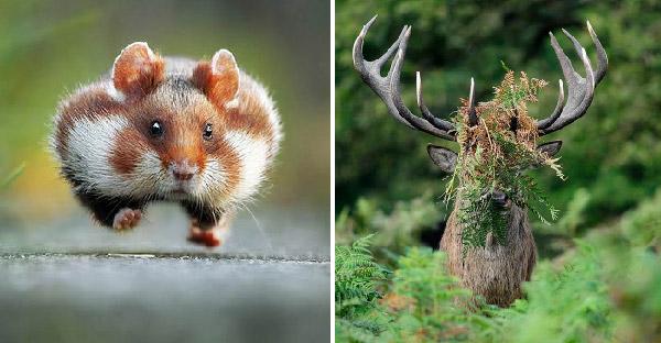 13 ภาพสัตว์โลกน่ารัก ที่จะสร้างเสียงหัวเราะให้คุณ ต้องอมยิ้มวนไป