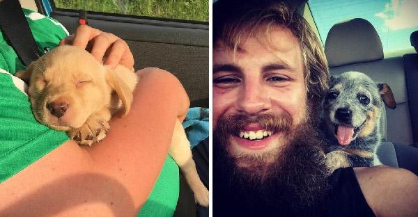 17 โมเม้นท์น่ารักๆของสุนัขไร้บ้าน ที่ได้นั่งรถเป็นครั้งแรกกับเจ้านายคนใหม่