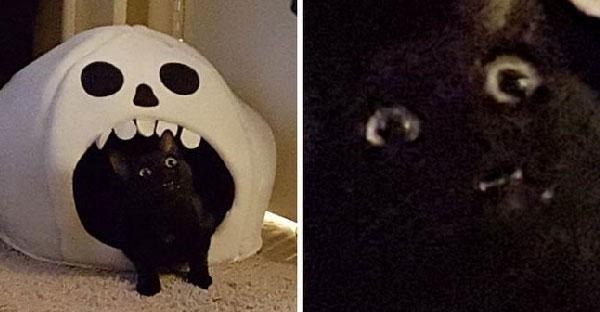 20 ภาพโคตรบังเอิญที่หมา-แมวทำหน้าขำแรงได้มากกว่าที่เราคิด ^_^