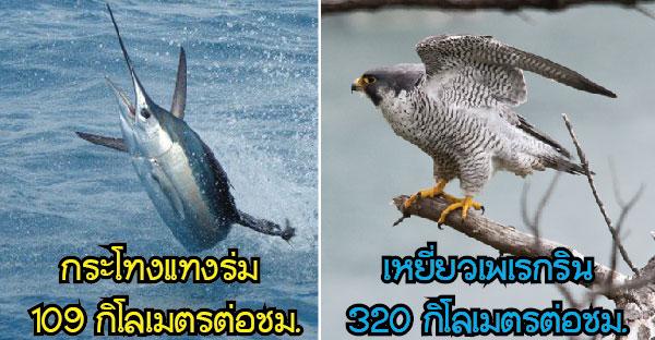 10 อันดับสัตว์โลกที่มีความเร็วมากที่สุด ที่รวดเร็วปานสายฟ้าฟาดจนเราคาดไม่ถึง !!