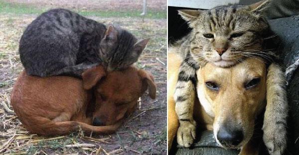 21 ภาพที่ยืนยันว่าหมาคืิอเบาะนอนของแมวเหมียว ไม่เชื่อลองดูเล๊ยยยยยย