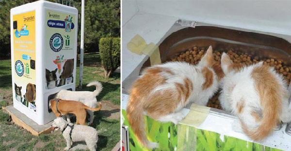เครื่องให้อาหารอัตโนมัติ ที่ช่วยทั้งสัตว์จรจัดและยังรักษาสิ่งแวดล้อมอีกด้วย