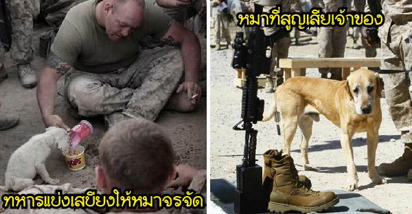 25 ภาพบีบหัวใจของทหารกับสัตว์เลี้ยงของพวกเขา