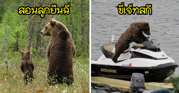 15 ภาพหมีคล้ายมนุษย์จนน่าตกใจ ที่จะทำให้ขำกระจาย ฮาไม่บันยะบันยัง!