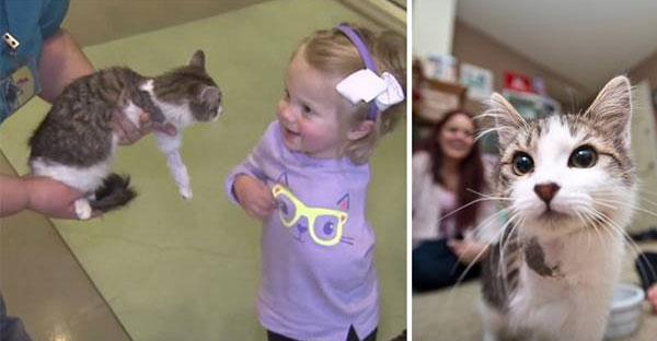 แมวสามขาถูกรับเลี้ยงโดยเด็กน้อยวัย 2 ขวบ ที่สูญเสียแขนเพราะมะเร็ง!!