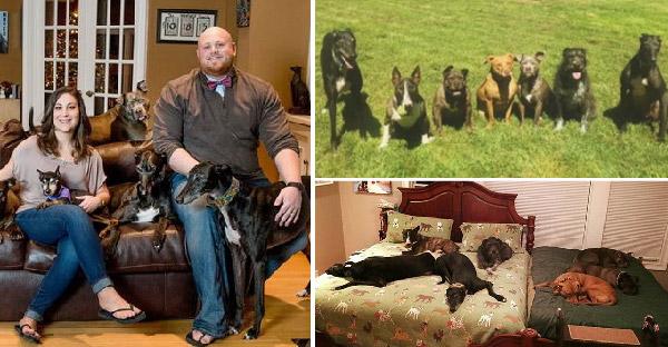 คู่รักรับเลี้ยงสุนัขกู้ภัยเกษียณอายุ 7 ตัว แถมยังอุทิศเตียงนอนให้จนต้องนอนพื้นแทน