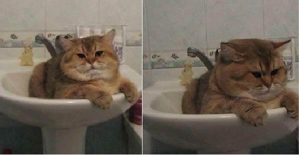 19 แมวอ้วนตุ้ยนุ้ย ที่จะมาทำให้คุณอมยิ้มไปทั้งวัน ^_^