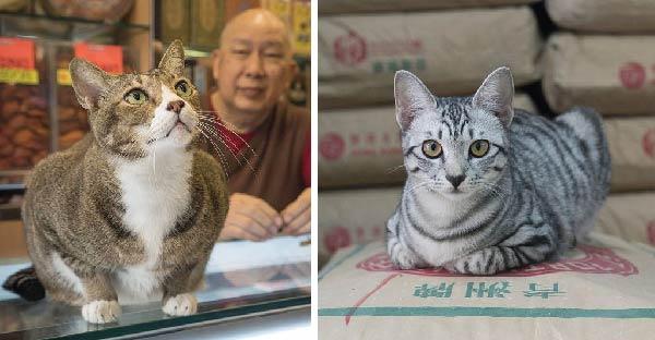 ร้ายขายของในฮ่องกงขายดิบขายดี เพราะแมวกวักมีชีวิตเหล่ารึป่าวนะ ^^