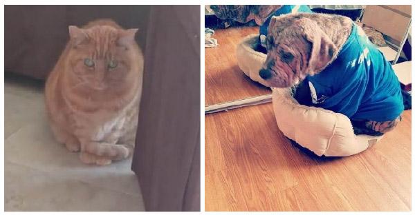 เจ้าหมาแก่ถูกนายเก่าลอยแพ พอย้ายเข้าบ้านใหม่โชว์เก๋าทันที แย่งที่นอนแมวเจ้าถิ่นจนหมดบ้าน!!!