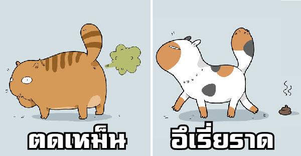 12 พฤติกรรมความแสบของแมวเหมียว ที่ทาสต้องเจอเป็นประจำ