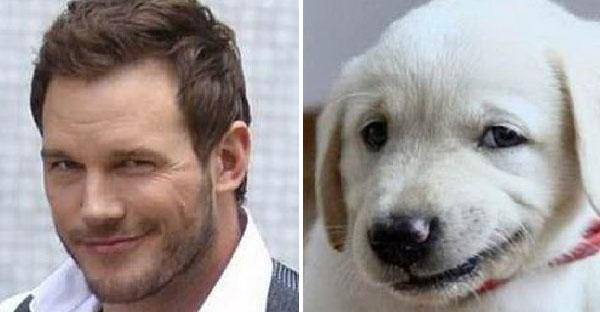 24 ภาพเปรียบเทียบหมากับคนดังระดับโลก มีหน้าตาเหมือนกันมากกว่าที่คิด