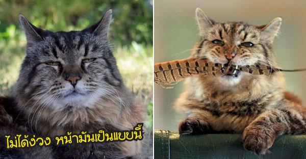 เจ้าแมวหน้าง่วงที่เป็นเจ้าของสถิติกินเนสบุ๊คว่าแก่ที่สุด ที่ยังมีชีวิตอยู่ในปัจจุบันนี้