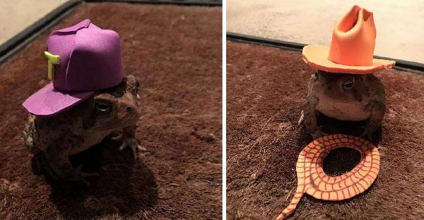 เมื่อคางคกชอบกระโดดเข้ามาในบ้านบ่อยๆ ชายคนนี้จึงทำหมวกสุดฮิปให้มันใส่ซะเลย