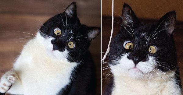 """Ozzy"" เจ้าเหมียวตาเหล่ ที่ดูเหมือนถูกสะกดจิตอยู่ตลอดเวลา"