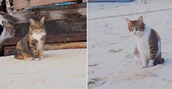 มารู้จักกับเกาะแมวเมืองไทย ที่มีแมวเหมียวอาศัยอยู่เต็มไปหมด