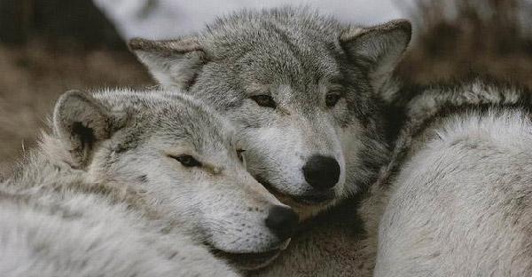 สัตว์ 15 สายพันธุ์ที่ชีวิตนี้ขาดคู่ครองไม่ได้