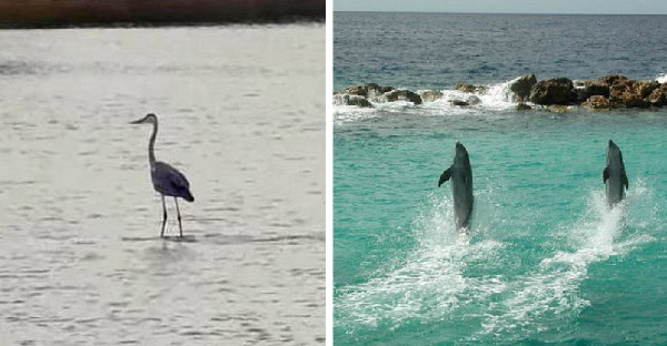 สัตว์ 7 ชนิดที่มีความสามารถเดินบนน้ำได้