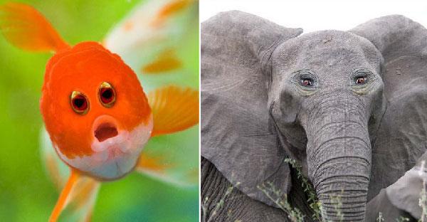 ถ้าสัตว์โลกมีตาอยู่ข้างหน้าเหมือนมนุษย์ จะมีหน้าตายังไงกันบ้างนะ