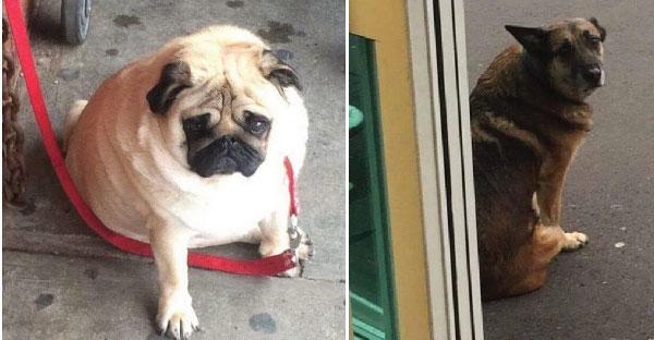 รวมภาพหมาหน้าเศร้าที่เหมือนอยากจะร้องไห้ออกมา เพราะถูกเจ้าของมัดทิ้งไว้นอกร้านค้า