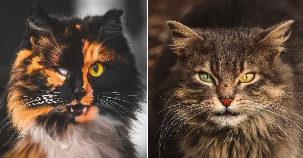 ช่างภาพวัย 19 จับแมวจรจัดมาถ่ายภาพจนออกมาดูสวยงาม และลึกลับน่าค้นหาจริงๆ