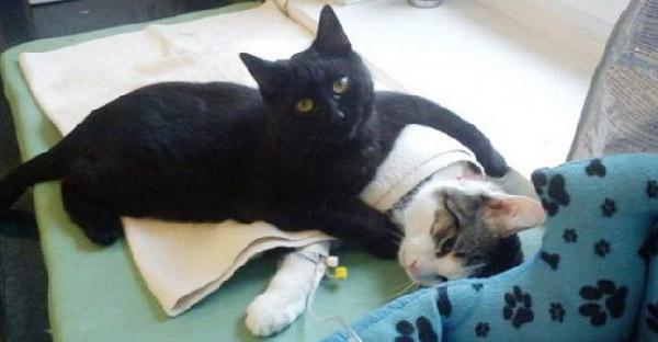 แมวดำจรจัดกลายเป็นผู้ช่วยพยาบาลโดยบังเอิญ เพราะปมหลังมีอดีตฝังใจ