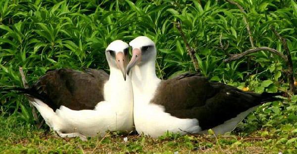 """16 สัตว์โลกที่มี """"ความรักมั่นคง"""" มากกว่ามนุษย์เสียอีก"""