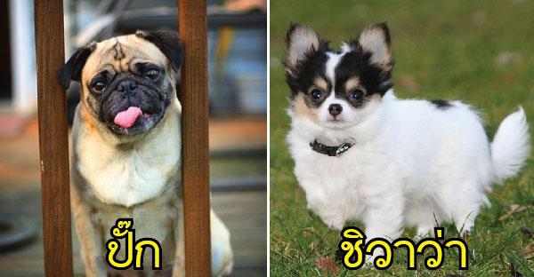 10 สายพันธุ์สุนัขที่เหมาะกับเจ้าของที่ขี้เกียจตัวเป็นขน….เพราะว่ามันดูแลง่ายนั้นเอง