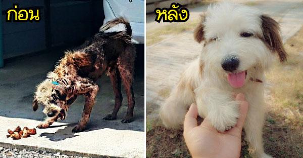 """""""หอมฟุ้ง"""" สุนัขจรที่มีชายใจดีรับเลี้ยง และเปลี่ยนชีวิตมันไป"""