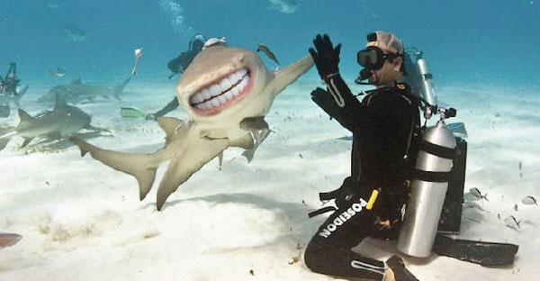 """ถ้าฉลามมี """"ฟัน"""" เหมือนมนุษย์จะหน้าตาเป็นยังไงกันบ้าง การันตีความฮาระดับห้าดาว"""