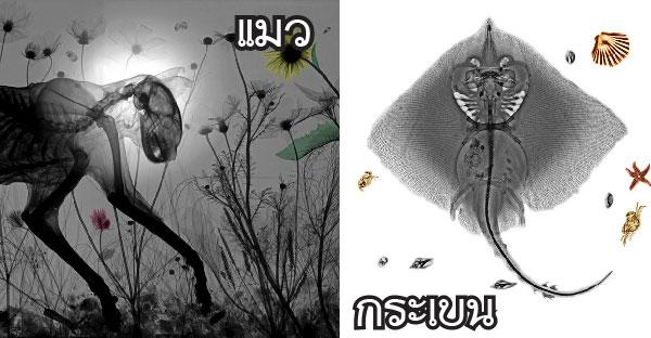 ศิลปะสัตว์โลกที่มองเห็นทะลุปรุโปร่ง จนเผยให้เห็นมุมมองที่ต่างกันออกไป