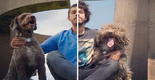 20 ภาพสุนัขก่อน-หลังตัดขน ที่จะทำให้คุณต้องแปลกใจกับความแตกต่างของมัน