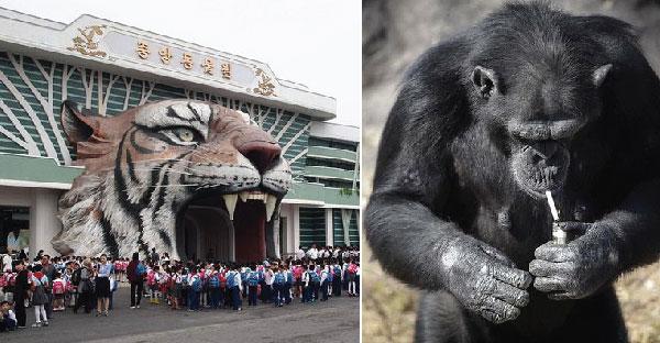 พาส่องสวนสัตว์เกาหลีเหนือที่มีสัตว์มากกว่า 800 ชนิด แถมมีทีเด็ดที่ ลิงสูบบุหรี่ ได้อีกด้วย