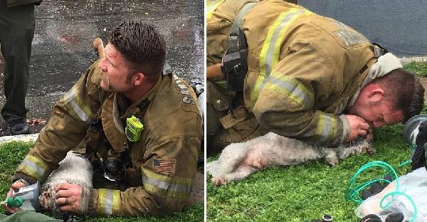 หมาน้อยถูกช่วยจากเพลิงไหม้ หยุดหายใจไปแล้ว ก่อนนักดับเพลิงทำ CPR ช่วยชีวิตได้สำเร็จ