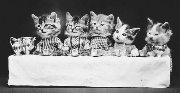"""แฟชั่นชุดประวัติศาสตร์ของ """"ลูกหมา"""" กับ """"ลูกแมว"""" มีอายุนานกว่า 100 ปี !! แต่ละภาพสุดๆจริงๆ"""