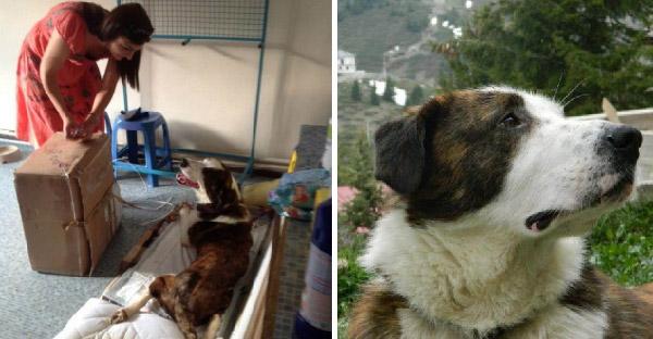 หญิงสาวพบหมาคลานขอความช่วยเหลือ ก่อนพบว่าถูกยิง จนเดินไม่ได้ตลอดชีวิต