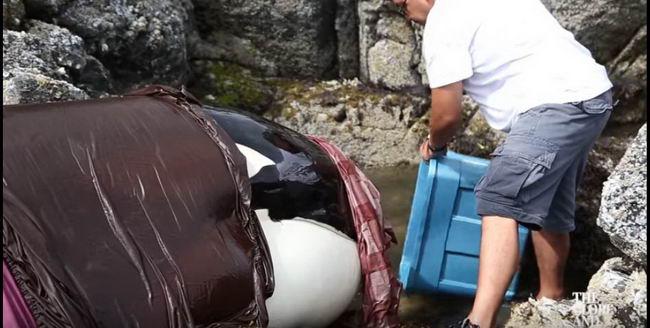 ชาวเลช่วยวาฬเพชรฆาตที่มาติดโขดหิน ด้วยวิธีบ้านๆแต่ได้ผลเวิร์คสุดๆ