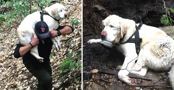 หมาตาบอดหลงอยู่ในภูเขา 8 วันเต็ม แต่เจ้าของไม่ยอมแพ้ ออกตามหาทั้งวันทั้งคืนจนเจอ