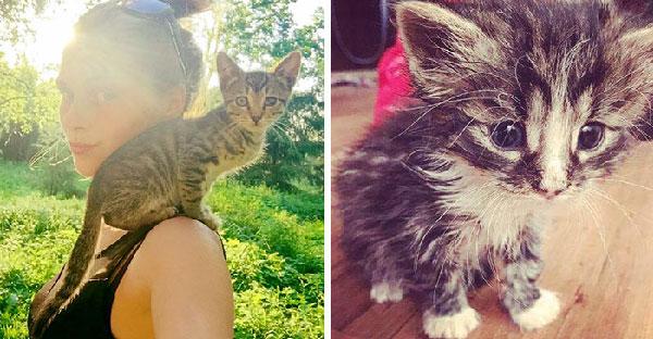 นักศึกษาใจดีที่ไม่สามารถหยุดช่วยแมวได้เลย ตลอด 2 ปีเธอช่วยเแมวมากกว่า 350 ตัว !!!!