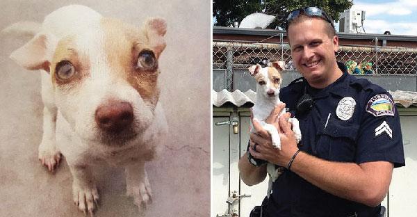 เรื่องราวของตำรวจผู้ช่วยชีวิตลูกหมาติดยาจากเจ้าพ่อยาเสพติด จนกลับมามีชีวิตชีวาอีกครั้ง