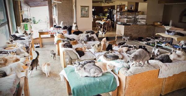 แมว..แมวเต็มไปหมด ! พบกับสาวใหญ่ใจดีผู้เคยเลี้ยงแมวมาแล้วกว่า 28,000 ตัว !!