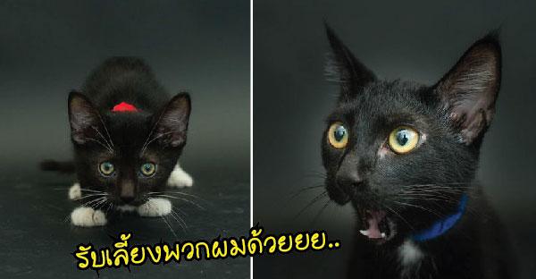 """""""แมวดำ"""" เป็นสัตว์ที่ถูกรับเลี้ยงเป็นอันดับสุดท้าย เพราะหลายคนมองว่าเป็นสัตว์ """"โชคร้าย"""""""