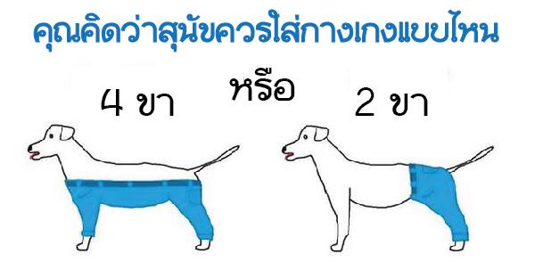 ชาวเน็ตต่างประเทศดีเบตและเปิดโหวตว่าสุนัขควรใส่กางเกงแบบไหนกันแน่ ?
