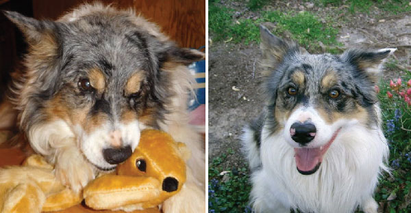 น้องหมาไล่จับกระรอกทุกวันแต่ไม่เคยสำเร็จ เจ้าของสงสารจึงซื้อตุ๊กตากระรอกให้..ฟินจัดเลย