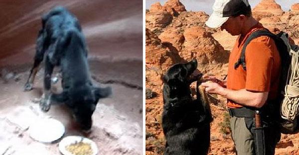 นักปีนเขาได้ยินเสียงสะท้อน เดินตามเสียงจนพบลูกหมารอการช่วยเหลือในหุบเขา