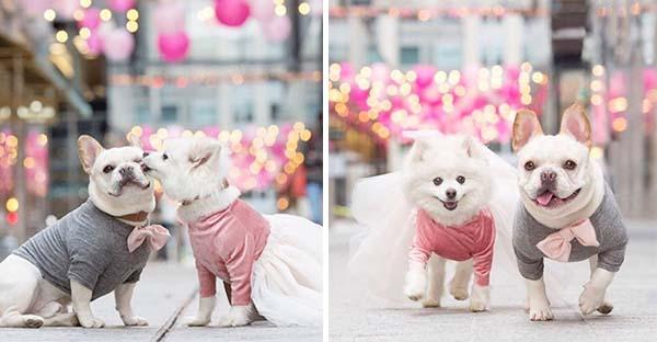 เซบาสเตียนกับลูน่า น้องหมาคู่รักสวีทหวานกันไม่เกรงใจคนโสด ที่โด่งดังบนโลกโซเชียล